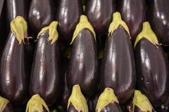 Eggplant aubergine brinjal stock photos