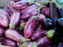Eggplant Or Aubergine For Sale Royalty Free Stock Image