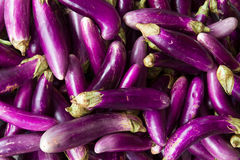Eggplant or aubergine on a Vietnamese market Stock Image