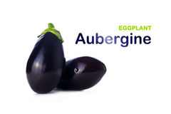 Eggplant or Aubergine on white background with title Stock Images