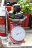 Eggplant on balance Royalty Free Stock Images