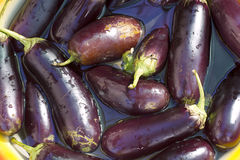 Eggplant blue torn soaked in water, preparations for preservatio Stock Photos