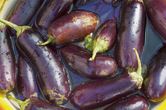 Eggplant blue torn soaked in water, preparations for preservatio Royalty Free Stock Images
