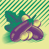 Eggplant composition. Eggplant with slices and leaf vector draw composition vector illustration