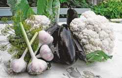 Eggplant, garlic, dill, cauliflower ,vegetables collected from the beds lie on the table Stock Photography