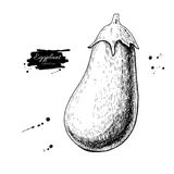 Eggplant hand drawn vector illustration. Isolated Vegetable engraved style object. Detailed vegetarian food Stock Image