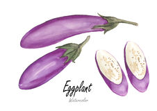Eggplant .Hand drawn watercolor painting on white background Stock Photos
