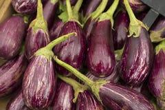 Fresh eggplants on the market - Solanum melongena Royalty Free Stock Photography