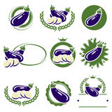 Eggplant labels and elements set. Vector Stock Photos
