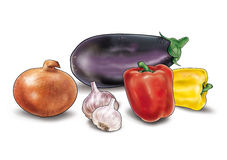 Eggplant, peppers, onion, garlic vegetables. Eggplant, peppers, onion, garlic the vegetables still life, isolated on white background illustration. Watercolor stock illustration