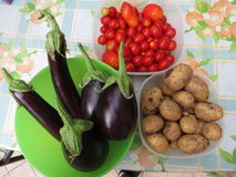 Eggplant, potatoes and tomatoes. In biologic garden Royalty Free Stock Photography