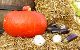 Eggplant and pumpkin. Pumpkin and eggplant on straw. Autumn harvest Royalty Free Stock Image