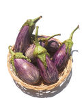 Eggplant purple. Wellness: fresh vegetables in nature Royalty Free Stock Image