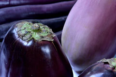 Eggplant in purple. Purple eggplant in beautiful color and shape, shown as raw and fresh vegetable and healthy food for dishes Stock Image