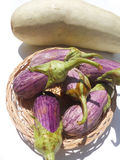 Eggplant purple and green pumpkin. Wellness: Fresh vegetables in nature Stock Photos
