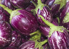 Eggplant small violet Royalty Free Stock Images
