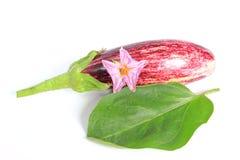 Eggplant (Solanum melongena) Stock Images