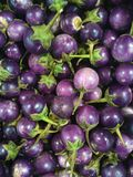 Eggplant. Solanum melongena is a species of nightshade commonly known in British English as aubergine Stock Image