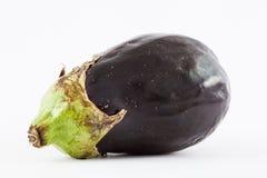 Eggplant Solanum melongena Stock Photography