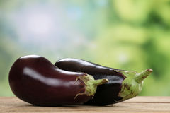 Eggplant in summer with copyspace Stock Images