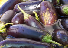 Eggplant torn soaked in water, preparations for preservation, Royalty Free Stock Photo