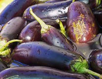 Eggplant torn soaked in water, preparations for preservation, Royalty Free Stock Images