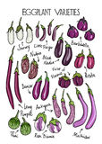 Eggplant varieties print Royalty Free Stock Photo