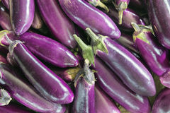 Eggplant Vegetable Background Stock Photography