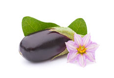 Eggplant vegetable Stock Photography