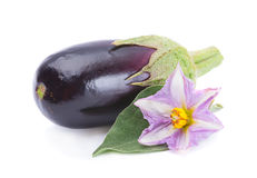 Eggplant vegetable Stock Images