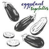 Eggplant vegetable set hand drawn vector illustration realistic sketch Stock Images