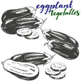 Eggplant vegetable set hand drawn vector illustration realistic sketch Stock Photography