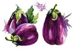 Eggplant on white background. Hand drawing watercolor on white background. stock illustration
