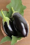 Eggplants. Stock Image