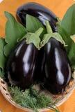Eggplants. Royalty Free Stock Images