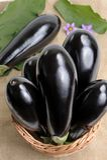 Eggplants. Stock Images