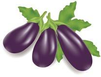 Eggplants stock illustration