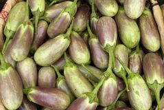 Eggplants. With stems attached, purple and green, piled in container Royalty Free Stock Photography