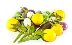 Eggplants. Any eggplants used in cooking Stock Image
