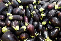 Eggplants in dark purple with drizzle of the rain. Fresh and shiny eggplants with drizzle of the rain full in bucket in fruit and vegetable market stock photos