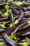 Eggplants Royalty Free Stock Photography