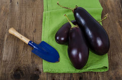 Eggplants and garden shovel on green cloth, horizontal view. Eggplants, garden shovel and green cloth on dark wood table, horizontal view Stock Images