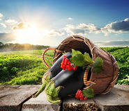 Eggplants and landscape Royalty Free Stock Image