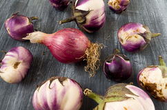 Eggplants and onion grown in organic farming Royalty Free Stock Photography