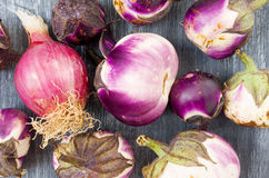Eggplants and onion grown in organic farming Royalty Free Stock Image