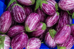 Eggplants with stripes at the market Royalty Free Stock Image