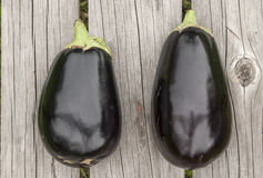 Eggplants and zucchini Royalty Free Stock Photos