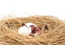 eggs белизна Стоковое Изображение RF