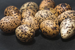 eggs гусына стоковое изображение