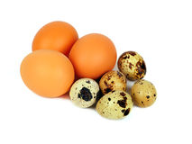 eggs изолированная курицами белизна триперсток Стоковое Изображение